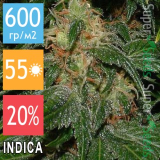 Семена Конопли Jah Seeds Northern Light Feminised