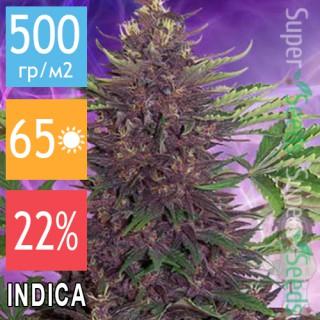 Семена Конопли Jah Seeds Purple Kush Feminised