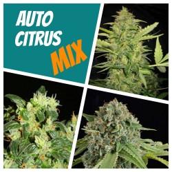 Автоцветущий цитрусовый mix