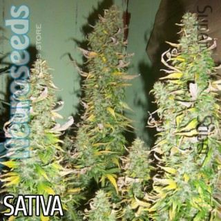 Семена Конопли Neuro Seeds Auto AK47 Feminised