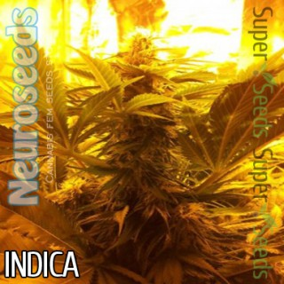 Семена Конопли Neuro Seeds Northern Light Feminised
