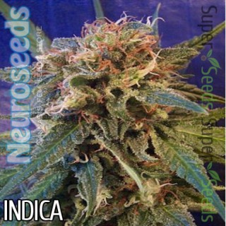 Семена Конопли Neuro Seeds Super Skunk Feminised
