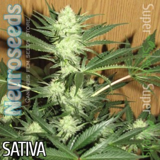 Семена Конопли Neuro Seeds Auto Cheese Feminised