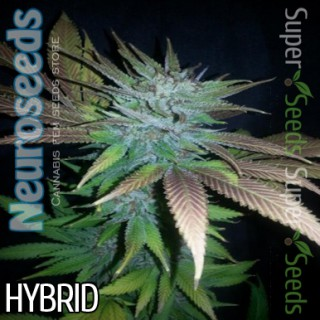 Семена Конопли Neuro Seeds Jack Herer Feminised