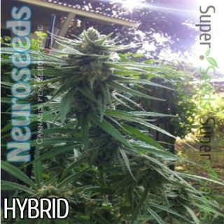 Семена Конопли Neuro Seeds Silver Haze Feminised