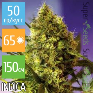 Семена Конопли Super Seeds Auto Big Devil Feminised