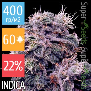 Семена Конопли Super Seeds Auto Blueberry Feminised
