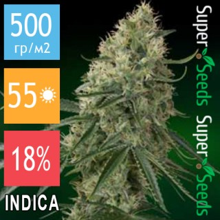 Семена Конопли Super Seeds Auto Caramel Cake Feminised