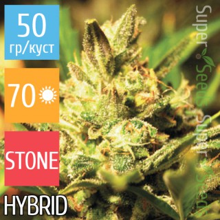 Семена Конопли Super Seeds Auto Critical+ Feminised
