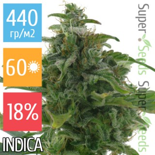 Семена Конопли Super Seeds Auto Diesel Feminised