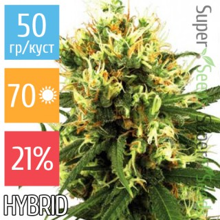 Семена Конопли Super Seeds Auto Haze Feminised