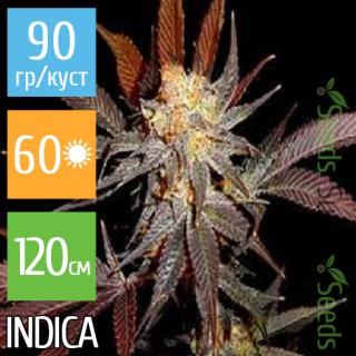 Семена Конопли Super Seeds Auto Lavender Feminised