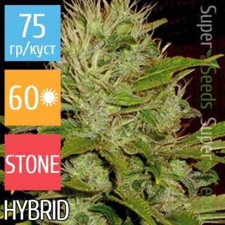 Семена Конопли Super Seeds Auto Mango Feminised