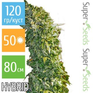 Семена Конопли Super Seeds Auto MaxiGom Feminised