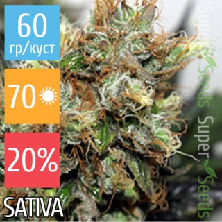 Семена Конопли Super Seeds Auto New York Diesel Feminised