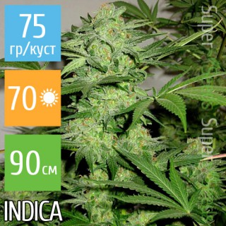 Семена Конопли Super Seeds Auto Northern Lights Feminised