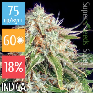 Семена Конопли Super Seeds Auto Super Bud Feminised