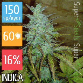 Семена Конопли Super Seeds Auto White Dwarf Feminised