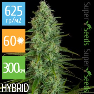 Семена Конопли Super Seeds Critical Jack Feminised