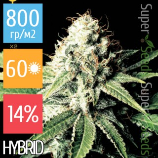 Семена Конопли Super Seeds Great White Shark Feminised