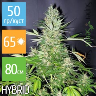 Семена Конопли Super Seeds Auto Lowryder2 Feminised