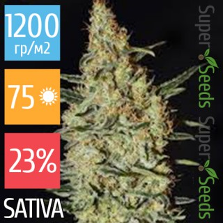 Семена Конопли Super Seeds Neville's Haze Feminised