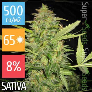Семена Конопли Super Seeds Skunk11 Feminised