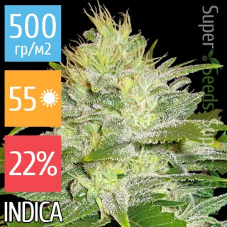 Семена Конопли Super Seeds White Russian Feminised