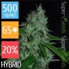 Семена Конопли Super Seeds White Widow Feminised XXXL