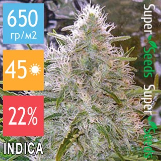 Семена Конопли Super Seeds Critical Mass Feminised