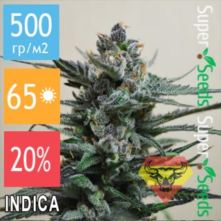 Семена Конопли Spanna Seeds Auto Blueberry SV Feminised