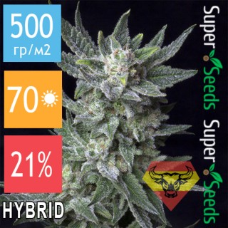 Семена Конопли Spanna Seeds Auto Bubblegum Feminised