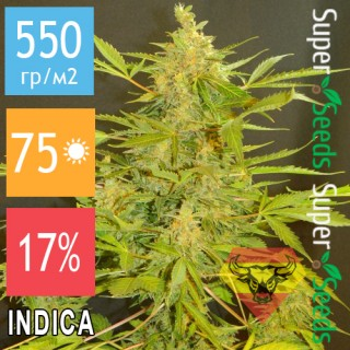 Семена Конопли Spanna Seeds Auto Spanish Rocket Feminised