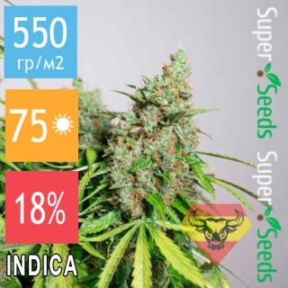 Семена Конопли Spanna Seeds Auto Super Mazar Feminised