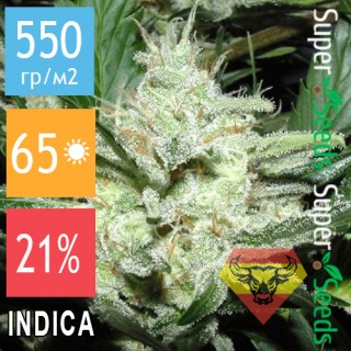 Семена Конопли Spanna Seeds Auto Super White Russian Feminised