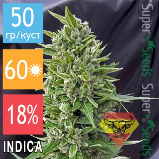 Семена Конопли Spanna Seeds Auto Northern Light Feminised
