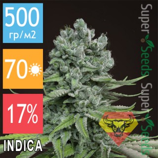 Семена Конопли Spanna Seeds Auto Super Skunk Feminised
