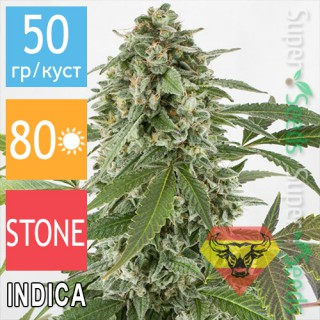 Семена Конопли Spanna Seeds Auto White Widow Feminised