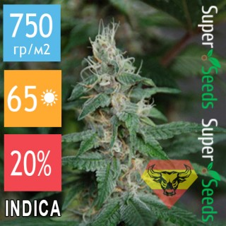 Семена Конопли Spanna Seeds Blueberry SV Feminised