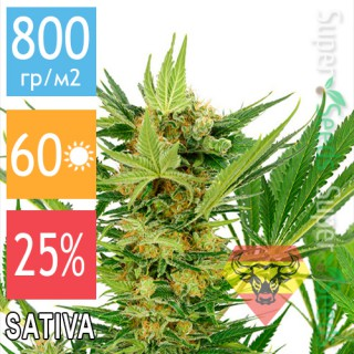 Семена Конопли Spanna Seeds AK-47SV Feminised