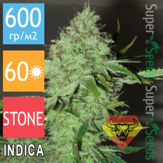 Семена Конопли Spanna Seeds Big Bud Feminised