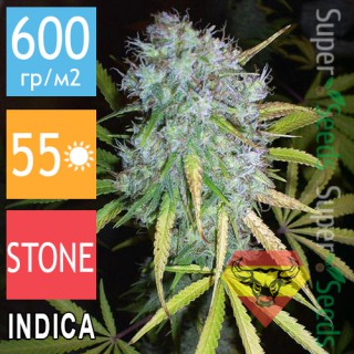 Семена Конопли Spanna Seeds Critical + Feminised