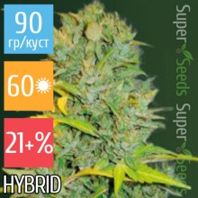 Auto Biggest Bud Feminised