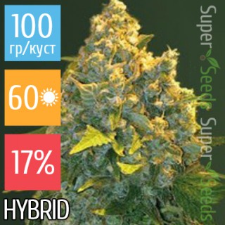 Семена Конопли Victory Seeds Auto Chronic Monster XXL Feminised