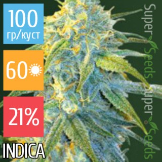 Семена Конопли Victory Seeds Auto Northern Light Feminised