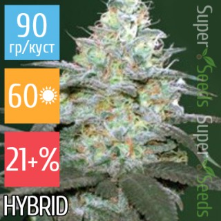 Семена Конопли Victory Seeds Auto Original Berry Feminised