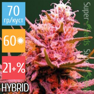 Семена Конопли Victory Seeds Auto Seemango Feminised