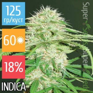 Семена Конопли Victory Seeds Auto Super Mazar Feminised