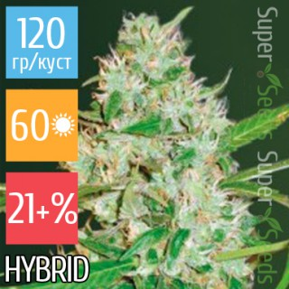 Семена Конопли Victory Seeds Auto Red Russian XXL Feminised