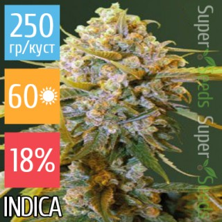 Семена Конопли Victory Seeds Biggest Bud Feminised